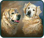 Pet Portraits - Harvey and Murphy